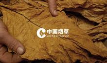 贵州中烟官网建设遵义烟草官网建设